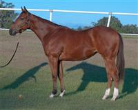 /horse/Moonstruck Maya 1