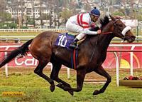 /horse/Vieja Pared