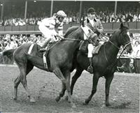 Winning the Blue Grass (1973)