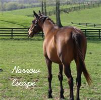 Exceller's daughter, Narrow Escape, was the first resident at Old Friends Retirement in KY