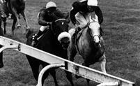 Pawneese winning the 1976 King George VI & Queen Elizabeth Diamond Stakes from the Captain Ryan Price trained.
