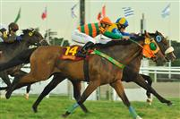 /horse/Veraneio