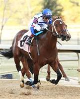 Tanzanite Cat wins the Smarty Jones Stakes at Oaklawn Park.