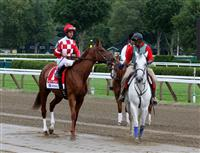 Pretty Prolific, second in the 2009 G1 Test, Saratoga