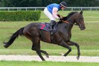 /horse/Quinzieme Monarque
