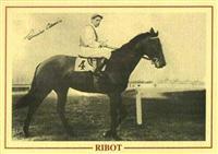 /horse/Ribot