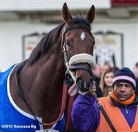 Third place finisher Wicked Strong in the paddock before the 2013 Remsen Stakes at Aqueduct