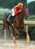 Rose To Gold wins the G2 Fantasy Stakes 2013 with Calvin Borel at Oaklawn Park.