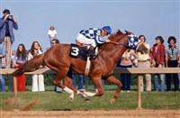 So You Think You Know the Secretariat Story?