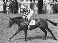 /horse/Sir Ivor
