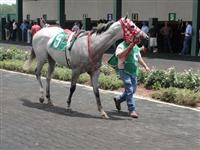 July 4, 2009: Smokin Again in Louisiana Downs paddock.