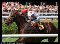 /horse/Souper Spectacular
