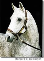 /horse/Spectacular bid