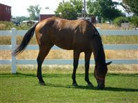 /horse/Dynawaki