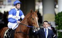 /horse/Star Witness 1