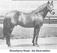 /horse/Strawberry Road