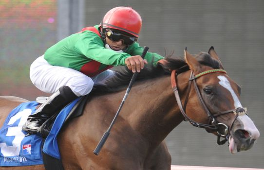 August 20, 2011 .Summer Soiree ridden by Gabriel Saez winning the Del Mar Oaks to Del Mar Thoroughbred Club, Del Mar, CA.