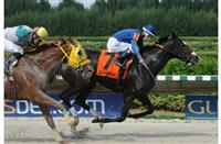 Swinger's Party, winner of the 2014 Sunshine Millions Distaff Preview