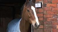 /horse/Kauto Star