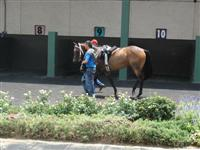 July 4, 2009: Tortuga Flats in Louisiana Downs paddock.