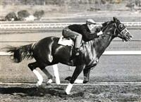 Dauber at Santa Anita 1939. Eddie Goodrich up.