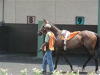 July 4, 2009: Vickies In Town in Louisiana Downs paddock.