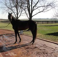 War Chant at Three Chimneys Farm