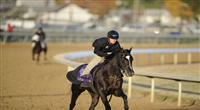 4 November 2010: Willcox Inn, trained by Michael Stidham and to be ridden by jockey John Velazquez, during work outs for the 2010 Breeders Cup at Churchill Downs in Louisville, Kentucky.(Scott Serio/Eclipse Sportswire)