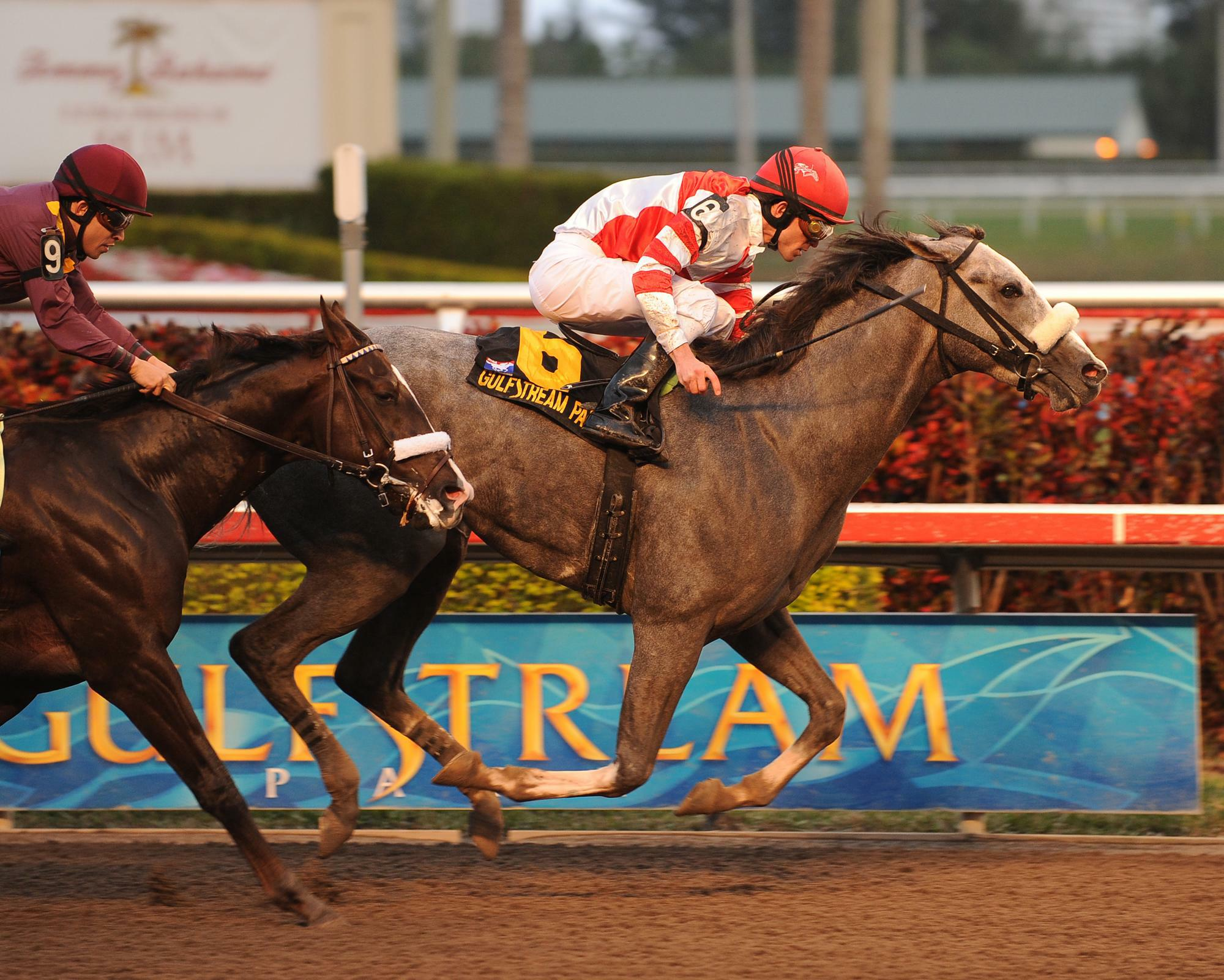 Winslow Homer takes the 2010 Holy Bull Stakes over Jackson Bend